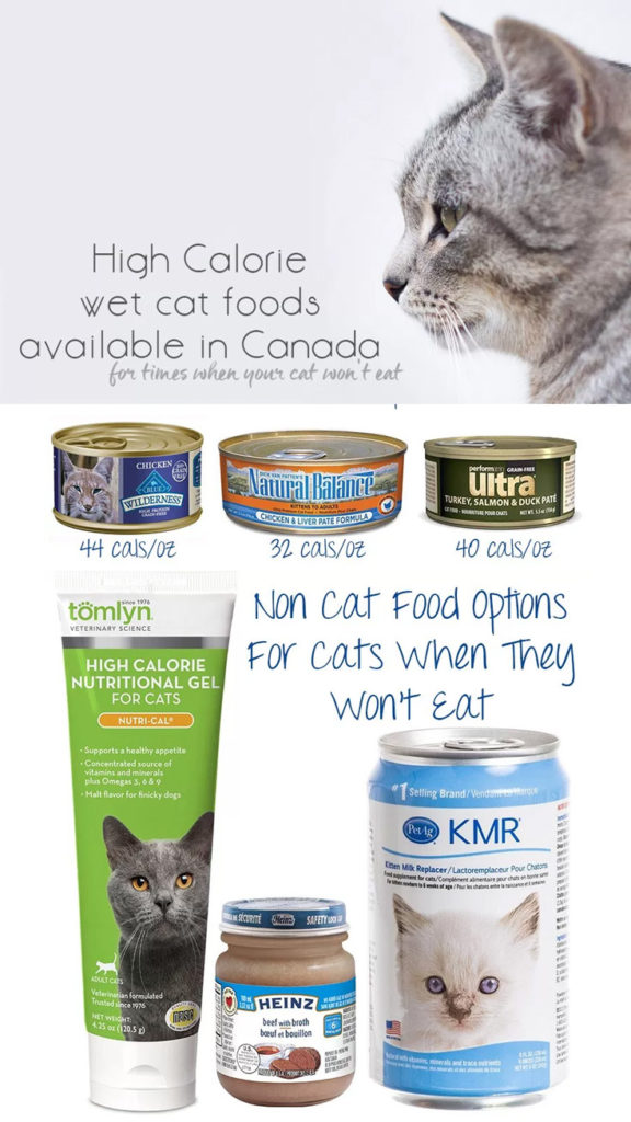 High Calorie Cat Food For Sick Cat