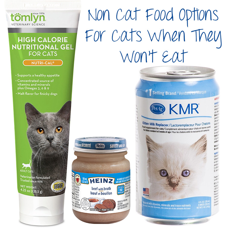 High Protein And High Calorie Wet Food For Cats